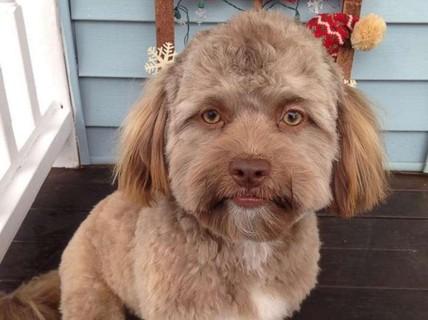 """Chó giống người đến khó tin gây """"bão mạng"""""""