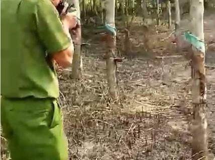 Nghi án chồng cũ phóng hỏa, đốt vườn cao su của vợ