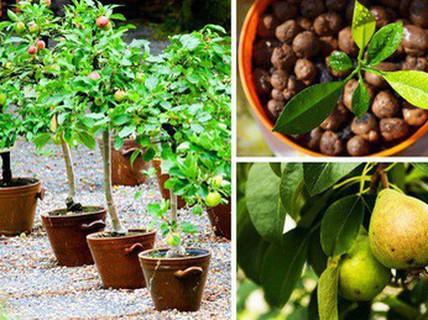 8 loại cây ăn quả nên trồng trong nhà mình