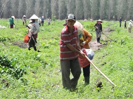 Rắc rối giao đất rừng ở Bà Rịa - Vũng Tàu: Dân chờ không được tự bao chiếm