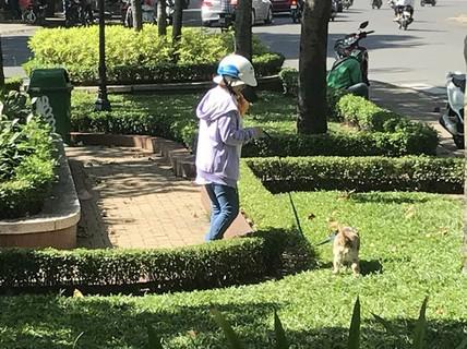 Cả hẻm đều nuôi chó, phải sống sao?