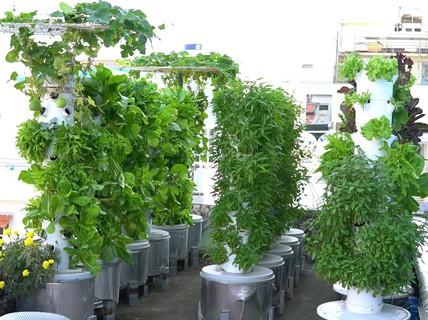 Độc đáo mô hình trồng rau khí canh trên sân thượng