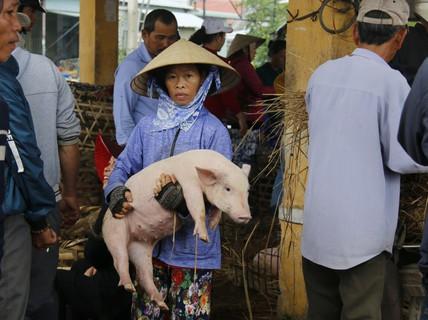 """Nghề """"độc"""" ở chợ heo lớn nhất Quảng Nam"""
