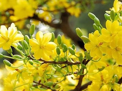Mùa Xuân - mùa của yêu thương