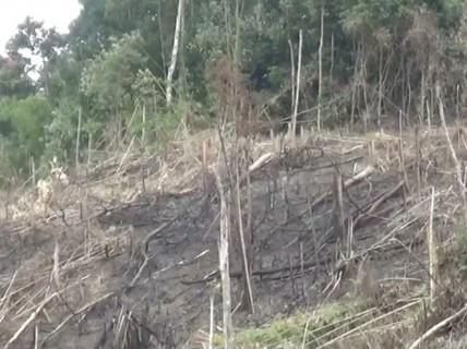 Phó chủ tịch xã tham gia phá 2,5 ha rừng, công an vào cuộc