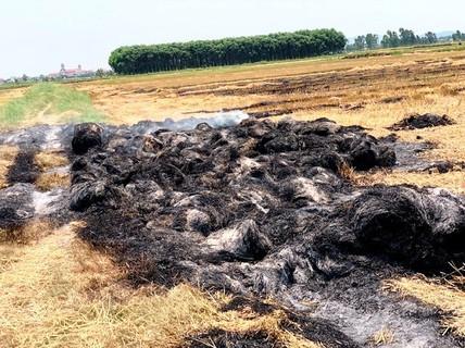 """Bị côn đồ đốt cháy rơm vì chưa """"làm luật"""" bảo kê… cánh đồng"""