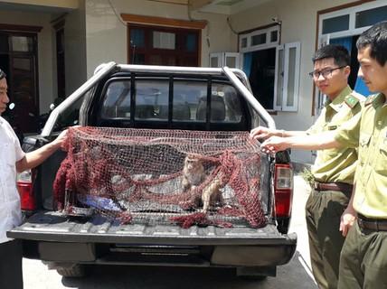 Bỏ tiền mua 2 con khỉ rồi mang đến kiểm lâm giao nộp bảo tồn