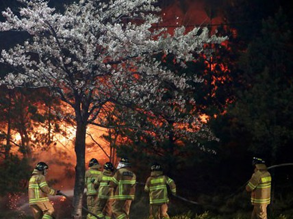 Hàn Quốc đối mặt thảm họa cháy rừng