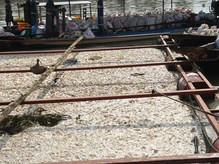 Thảm kịch trên sông La Ngà