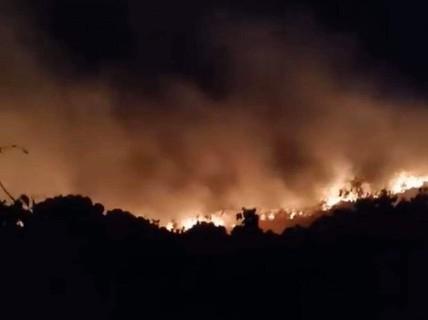 Cháy hơn 5.000 m2 thực bì trên núi Sơn Trà