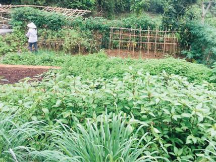 Hà Nội rộ mô hình cho thuê đất trồng rau