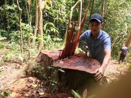 """Bất ngờ với kết luận xử lý """"nhẹ tay"""" của UBKT Tỉnh ủy Quảng Bình về 2 vụ phá rừng!"""