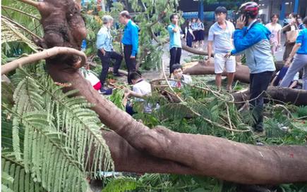 Bộ trưởng Phùng Xuân Nhạ gửi lời chia buồn tới gia đình học sinh tử vong do cây đổ
