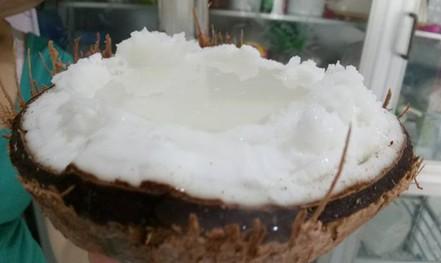 Dừa sáp 250.000 đồng/quả, nông dân rủ nhau mua dừa giống về trồng