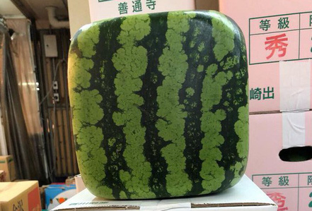 Dưa hấu vuông Nhật Bản xuất hiện ở Hà Nội: Giá chát 4,5 triệu đồng/quả