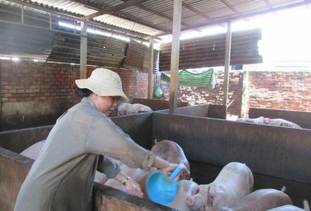 """Giá thịt heo tăng cao kỷ lục, gấp đôi thời kỳ """"giải cứu"""""""