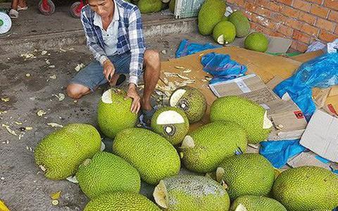 """Người dân Bình Phước đổ xô trồng mít Thái vì lãi """"khủng"""""""