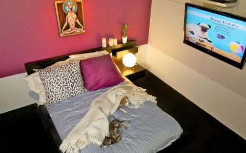 Khách sạn 5 sao dành cho thú cưng ở Mỹ giá 200 USD/đêm