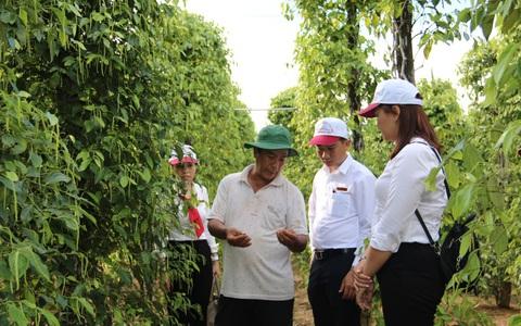 Agribank đồng hành với đặc sản tiêu Phú Quốc