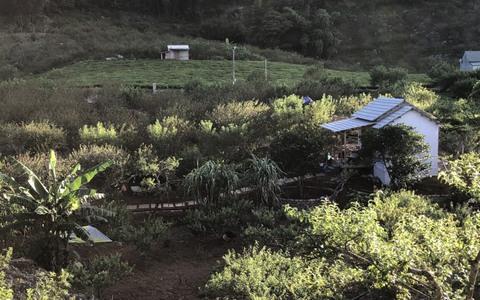 Xây nhà sống giữa vườn mận vì mắc kẹt ở Mộc Châu