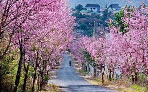 Hà Nội, Đà Lạt vào top điểm ngắm hoa xuân châu Á