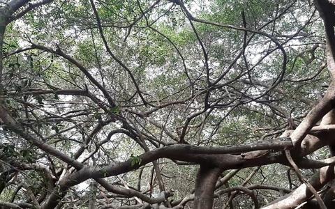 CLIP: Ngất ngây trước vẻ đẹp yên bình của rừng gừa ở miền Tây