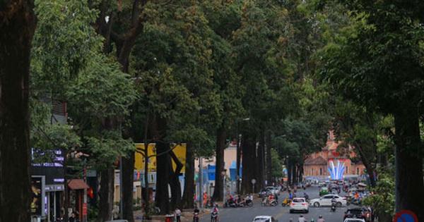 Tạo mảng xanh cho thành phố