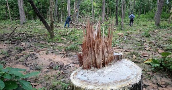 Giữ rừng bằng công nghệ ảnh viễn thám