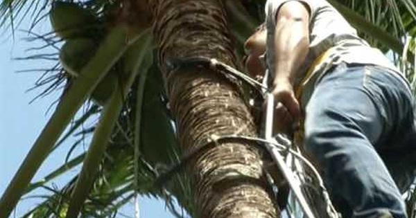Cứu sống ngoạn mục thanh niên nghèo té cây dừa cao 5m khiến đốt sống gãy nát