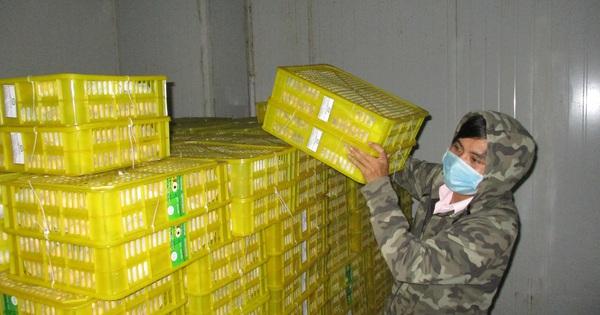 Trái cây, gạo Việt khó vào Mỹ, vì sao?
