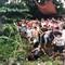 Clip hàng trăm người dân vây bắt 2 thanh niên nghi trộm chó