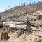 Gần 61 ha rừng bị phá, hàng loạt kiểm lâm Bình Định bị kỷ luật